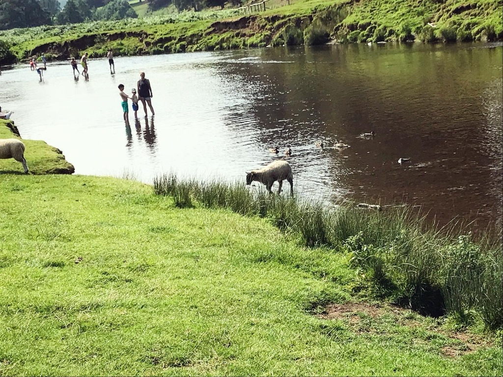 It was that hot...there were sheep in the river too!